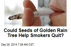 Could Seeds of Golden Rain Tree Help Smokers Quit?