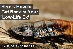 Here's How to Get Back at Your 'Low-Life Ex'