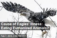 Cause of Eagles' Illness: Eating Euthanized Animals?