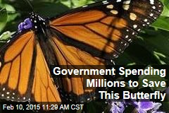 Government Spending Millions to Save This Butterfly