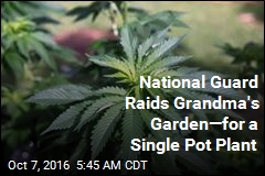 National Guard Raids Grandma's Garden—for a Single Pot Plant