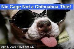 Nic Cage Not a Chihuahua Thief