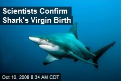 Scientists Confirm Shark&#39;s Virgin Birth