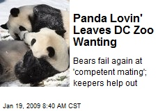Panda Lovin' Leaves DC Zoo Wanting