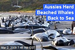 Aussies Herd Beached Whales Back to Sea
