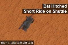 Bat Hitched Short Ride on Shuttle