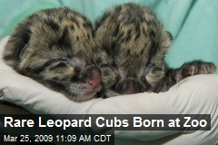 Rare Leopard Cubs Born at Zoo