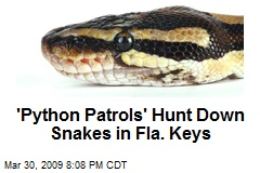 'Python Patrols' Hunt Down Snakes in Fla. Keys