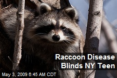 Raccoon Disease Blinds NY Teen