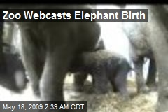 Zoo Webcasts Elephant Birth