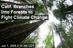 Calif. Branches Into Forests to Fight Climate Change