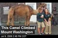This Camel Climbed Mount Washington