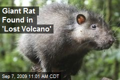 Giant Rat Found in 'Lost Volcano'