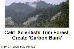 Calif. Scientists Trim Forest, Create &#39;Carbon Bank&#39;