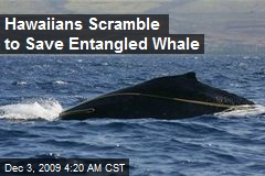 Hawaiians Scramble to Save Entangled Whale