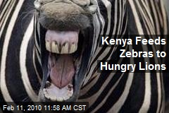 Kenya Feeds Zebras to Hungry Lions