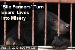 &#39;Bile Farmers&#39; Turn Bears&#39; Lives Into Misery