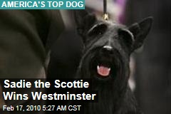 Sadie the Scottie Wins Westminster