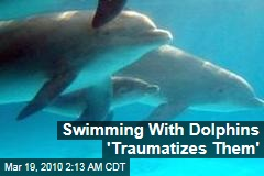 Swimming With Dolphins 'Traumatizes Them'