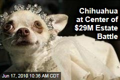 Chihuahua at Center of $29M Estate Battle
