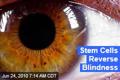 Stem Cells Reverse Blindness