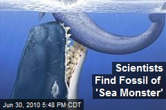 Scientists Find Fossil of &#39;Sea Monster&#39;